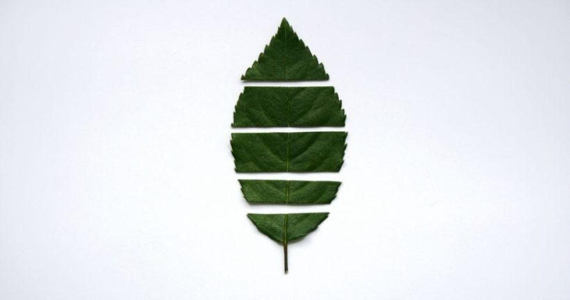 zerschnittenes Blatt illustriert Umweltschutz und vegane Ernährung