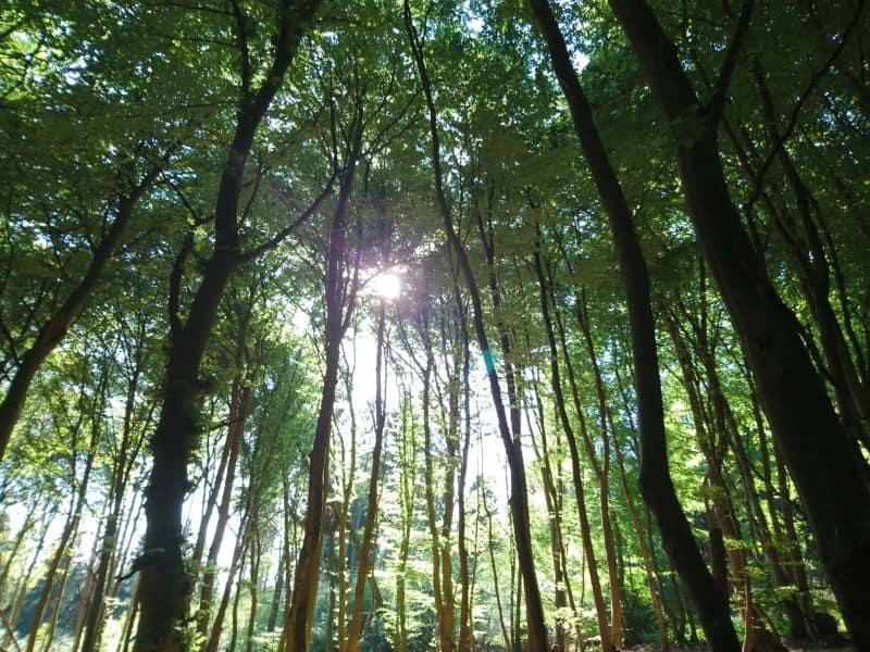 den Wald genießen und mit veganer Ernährung die Umwelt schützen