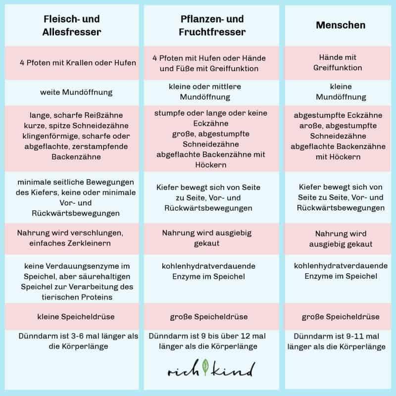 ein Vergleich zwischen Fleisch- und Allesfressern, Pflanzen- und Fruchtfressern und Menschen
