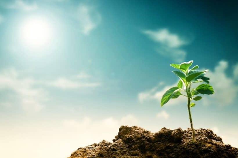 Pflanze spriest aus der Erde und wird von Sonne angestrahlt, vegane Ernährung hat positive Auswirkungen auf die Bodenqualität.